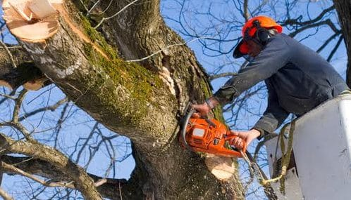 Leaf it to The Professionals at Fort Worth Arborist
