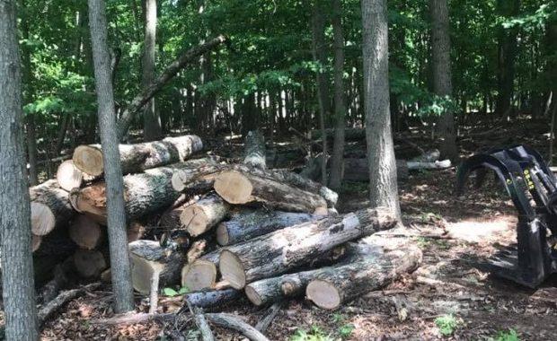 Tree service in Sterling VA